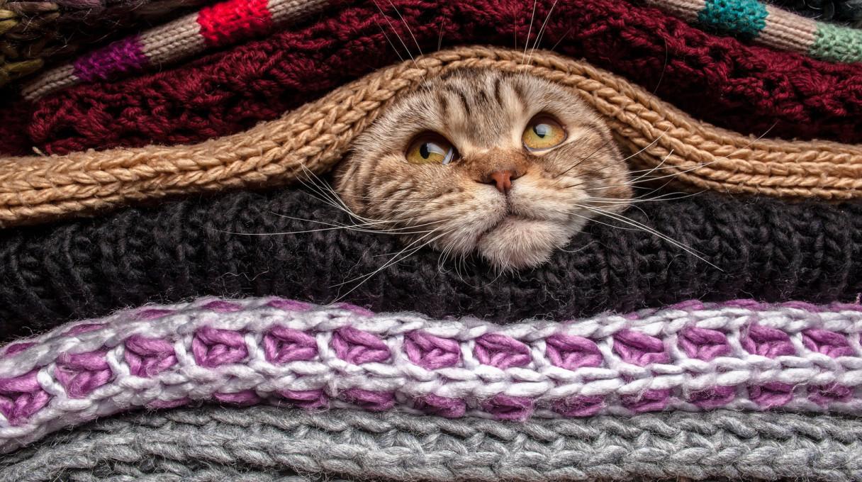 katinas-tarp-megztiniu-54a9498501ccb